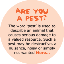 Are you a pest?